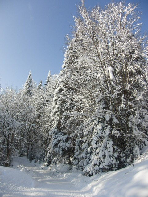 The snowy woods surrounding the castle.