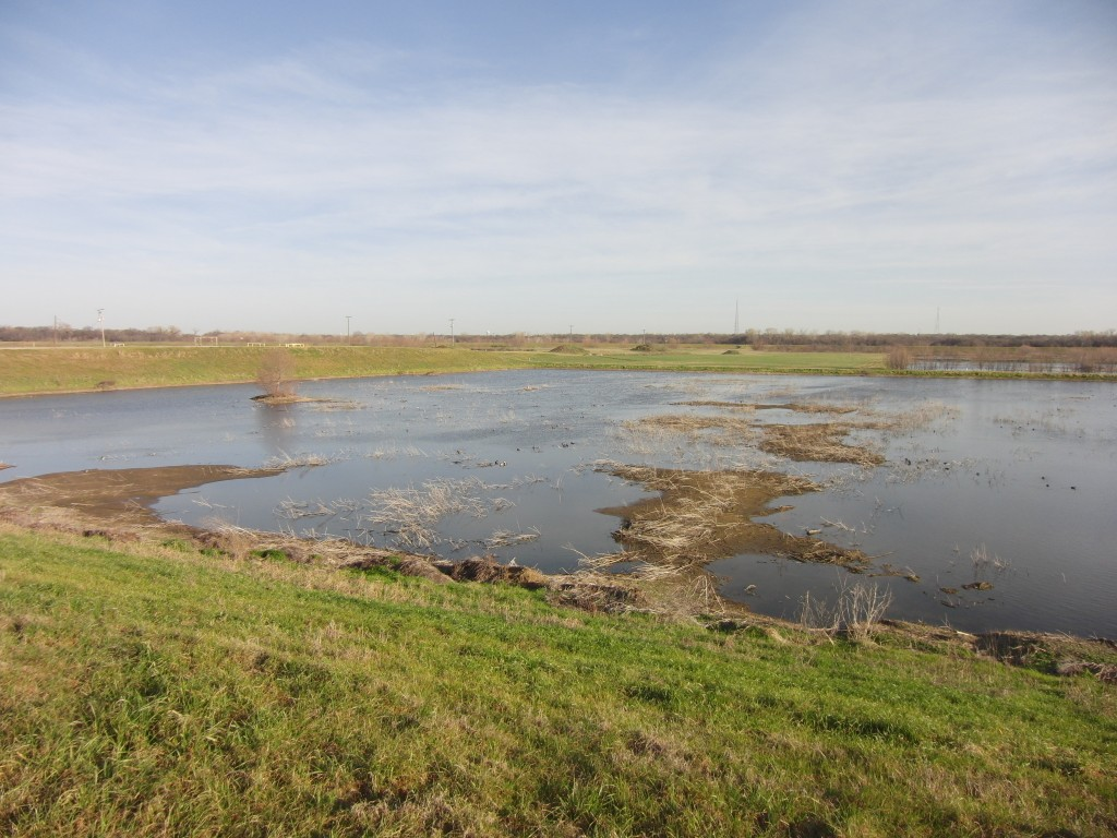 The largest pond at Village Creek, with about a thousand ducks of various species scattered about.