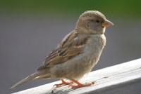 A sparrow outside the hotel