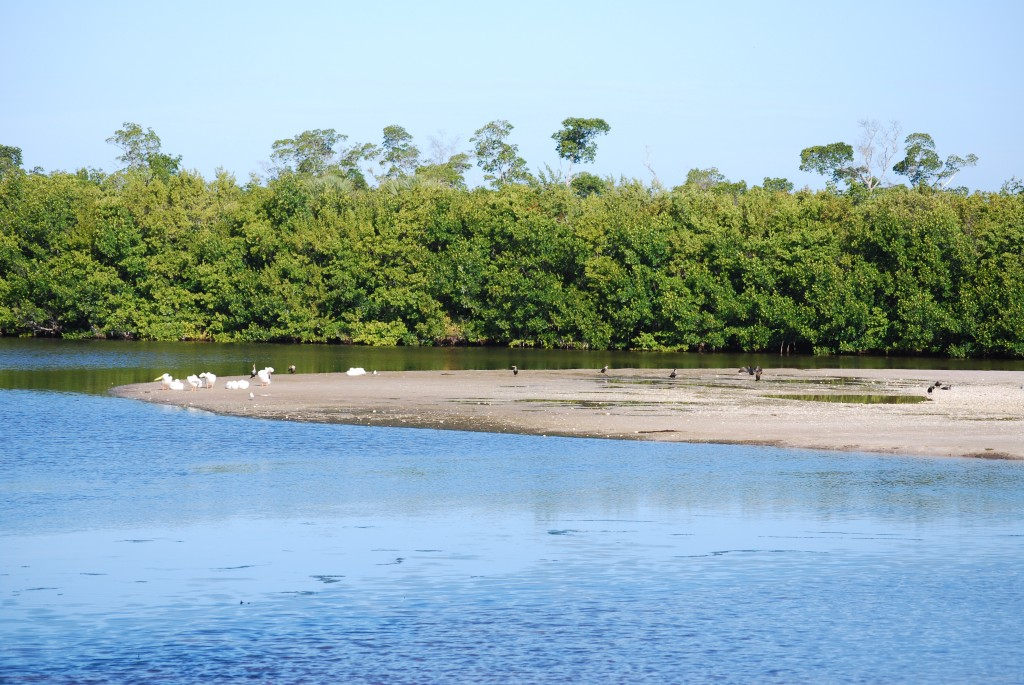 "A typical sight in ""Ding"" Darling: a sandbar, some water, and mangrove forest."